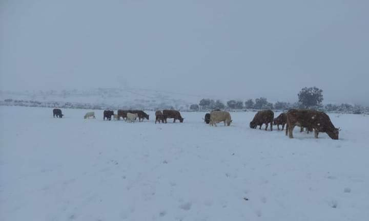 Agricultores y ganaderos afectados por Filomena contarán con un alivio temporal 1