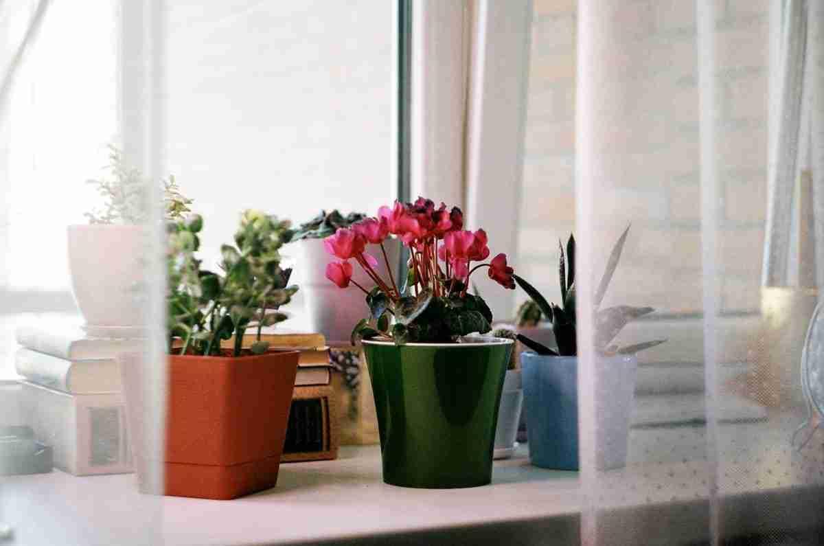 plantas de interior con sol