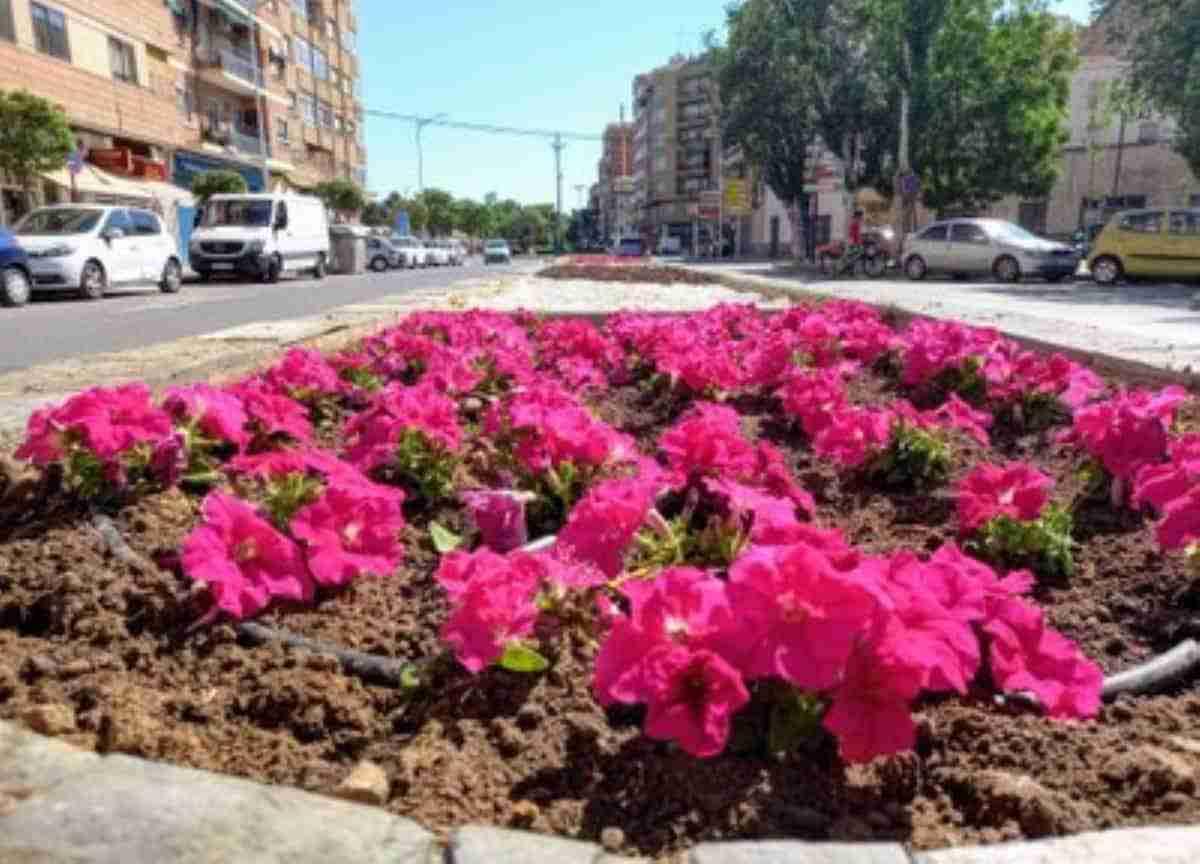 cambio de flor de temporada parques de albacete
