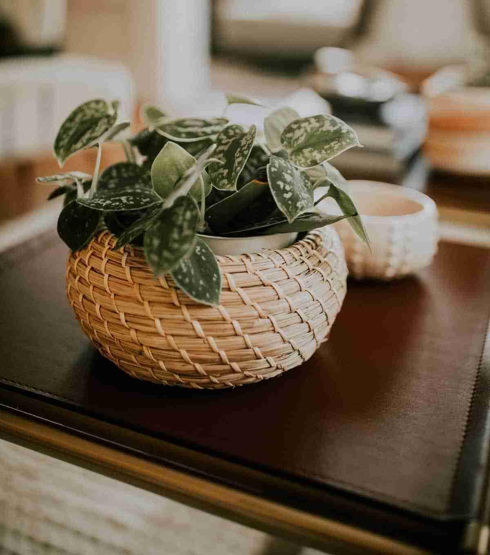 artesanias de cesteria