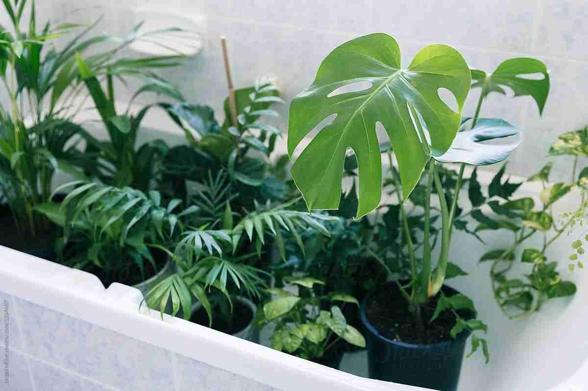 Trucos caseros para el cuidado de las plantas 16