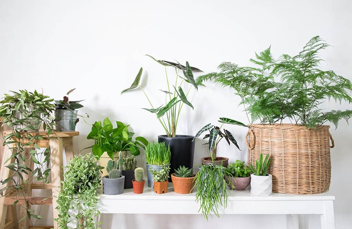 Trucos caseros para el cuidado de las plantas 19
