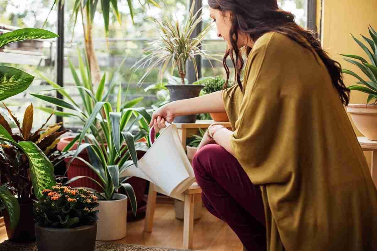 Trucos caseros para el cuidado de las plantas 15