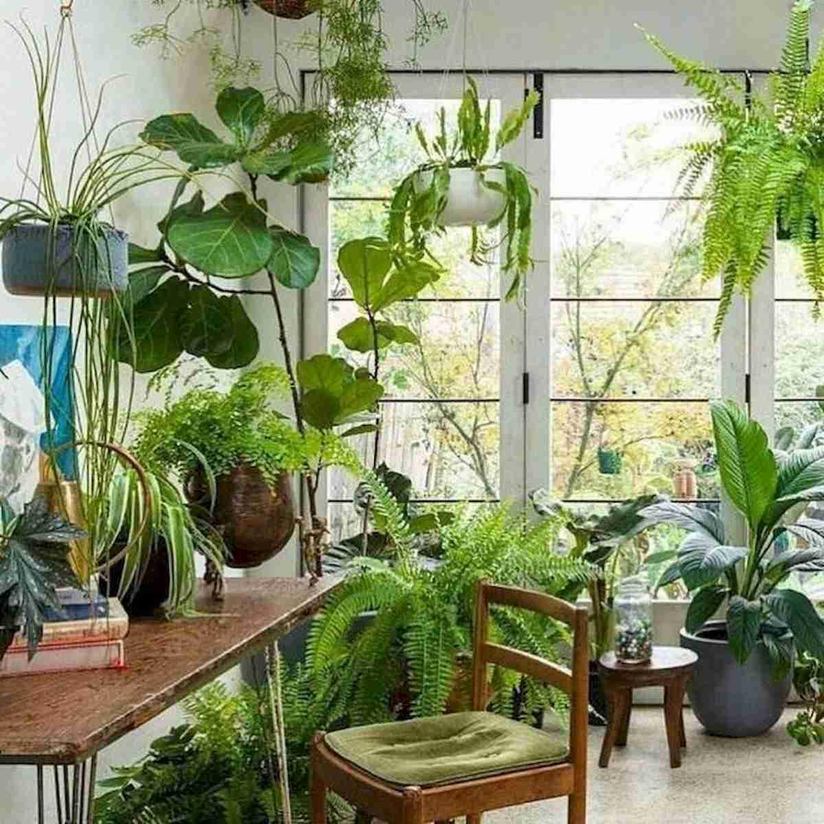 Trucos caseros para el cuidado de las plantas 21