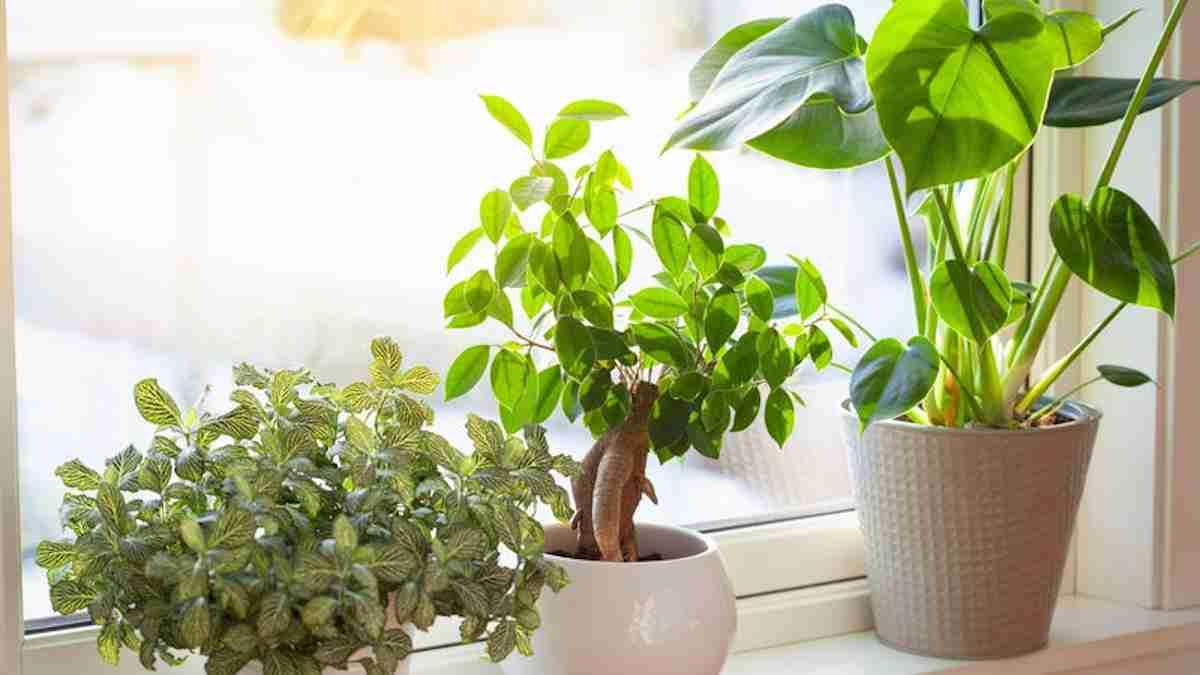 Trucos caseros para el cuidado de las plantas 17